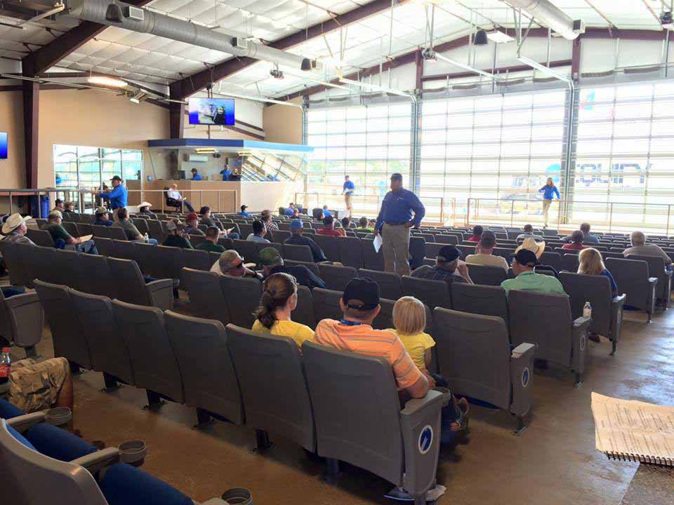 Equify Auction House Sealy Tx Completed 2015