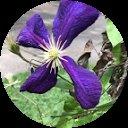 Purple Frog Avatar